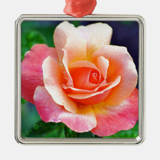 Rose in Full Bloom Silver-Colored Square Ornament