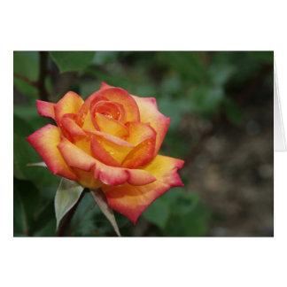 Rose in the Garden Card