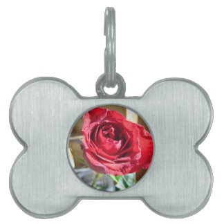 Rose in the sun pet name tag