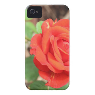 rose iPhone 4 Case-Mate case