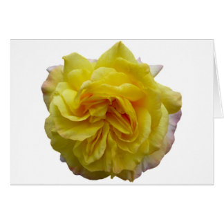 Rose jaune de jardin anglais carte de vœux
