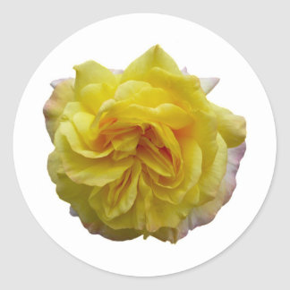 Rose jaune de jardin anglais sticker rond
