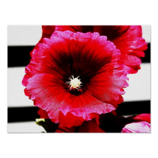 Rose Mallow on Stripes Poster