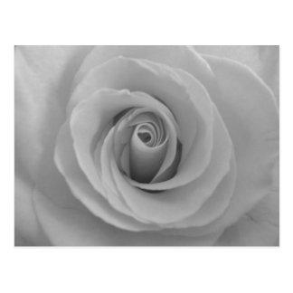 Rose noir et blanc cartes postales