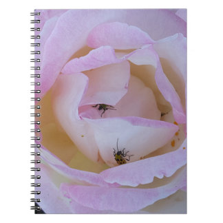 Rose Notebooks