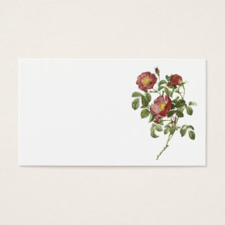 rose of love (Rosa pumila) by Redouté Business Card