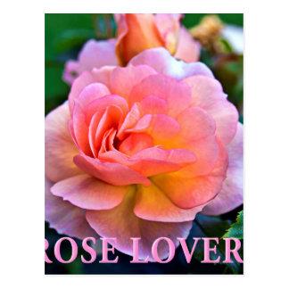ROSE OF LOVER POSTCARD
