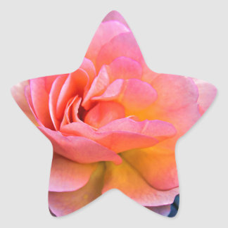 ROSE OF LOVER STAR STICKER