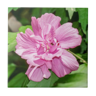 Rose of Sharon Bloom Ceramic Photo Tile