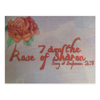 rose of sharon postcard