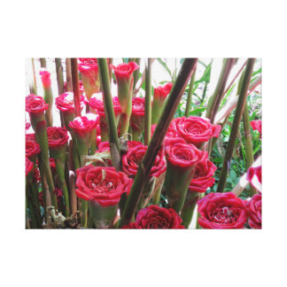 Rose of Siam Canvas Print