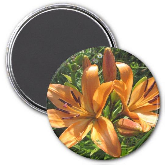 Rose Orange Asiatic Lilies Magnet
