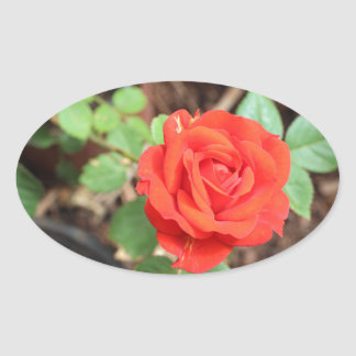 rose oval sticker