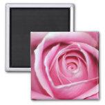 Rose parfait de rose magnets