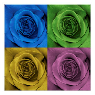 Rose Photography Color Collage Poster