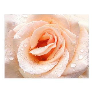 Rose raindrop postcard