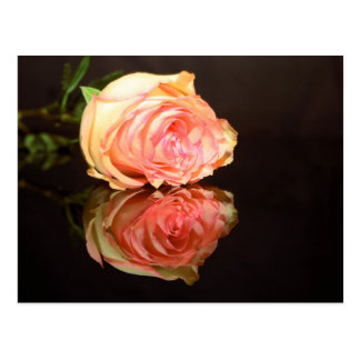 Rose Reflections Postcard