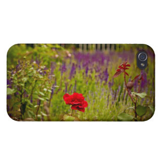 Rose rouge coques iPhone 4/4S
