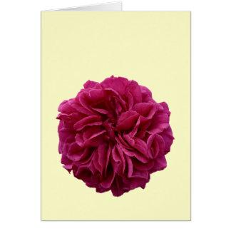 Rose rouge froncé de jardin anglais de pays cartes de vœux