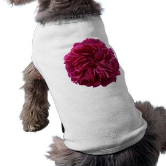 Rose rouge froncé de jardin anglais de pays t-shirts pour chien