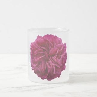 Rose rouge froncé de jardin anglais de pays tasse