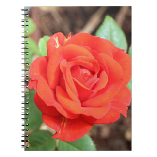 rose spiral notebooks