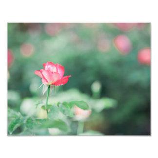 Rose to Life Photo Print