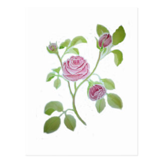 Rose Vine WC201711k Postcard
