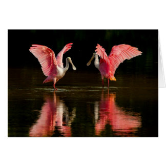 Roseate Spoonbill Mating Dance Card