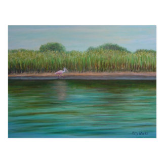 ROSEATE SPOONBILL ON EAST CREEK Postcard