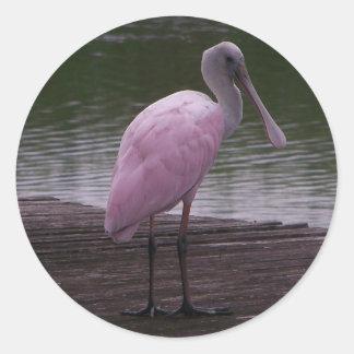 Roseate Spoonbill Round Sticker