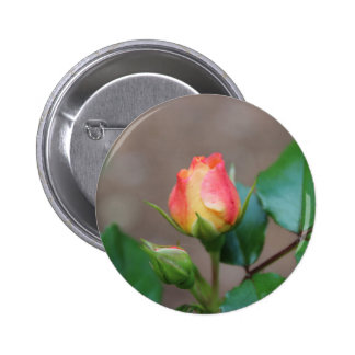 Rosebud Pinback Buttons