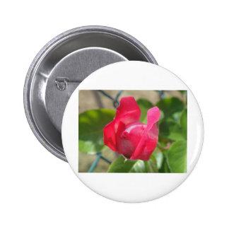 Rosebud Buttons