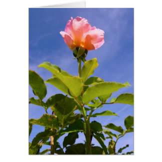 Rosebud Greeting Cards