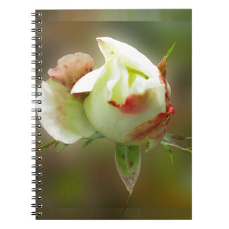 rosebud glowing notebooks