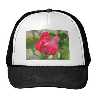 Rosebud Trucker Hat