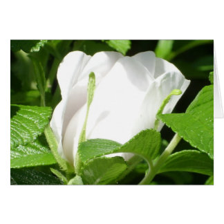 Rosebud notecard greeting card