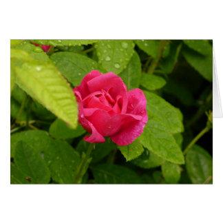 Rosebud notecard
