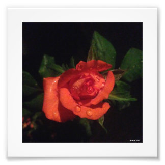 Rosebud Photo Print