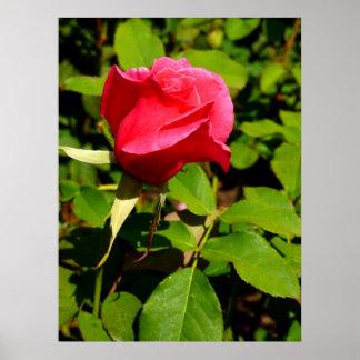 Rosebud Print