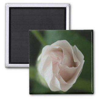 rosebud square magnet