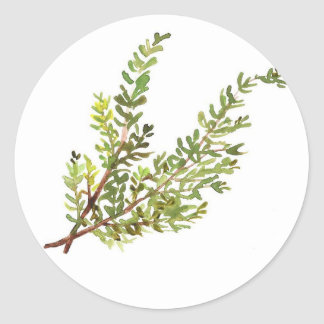 Rosemary herb Rosemary watercolour painting Classic Round Sticker