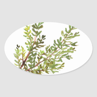 Rosemary herb Rosemary watercolour painting Oval Sticker
