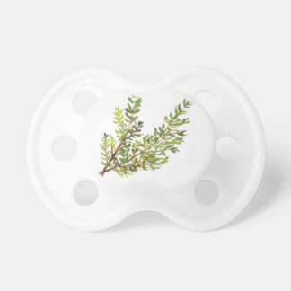 Rosemary herb Rosemary watercolour painting Pacifier