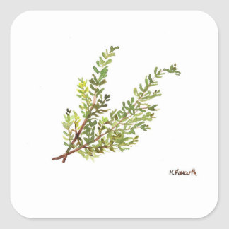 Rosemary herb Rosemary watercolour painting Square Sticker