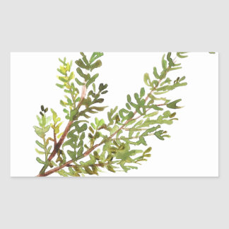 Rosemary herb Rosemary watercolour painting Sticker