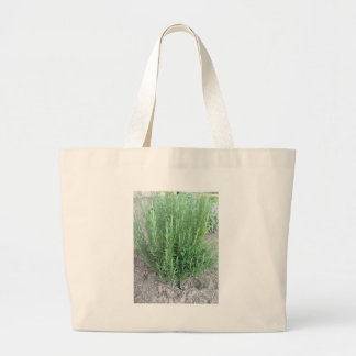 Rosemary plant in the garden . Tuscany, Italy Large Tote Bag