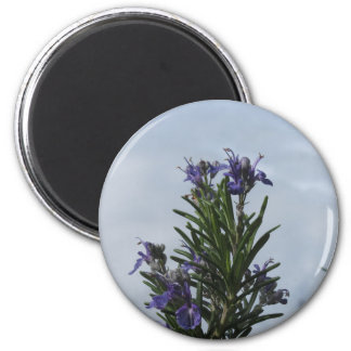 Rosemary plant with flowers against the sky 2 inch round magnet