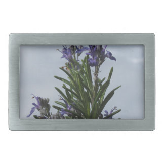 Rosemary plant with flowers against the sky belt buckles