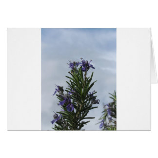 Rosemary plant with flowers against the sky card